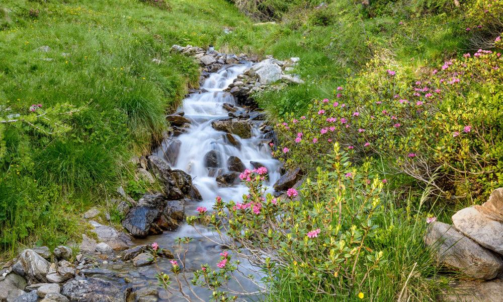 Urlaub auf dem BIO Bauernhof in Südtirol - Der Hintnerhof im Gsiesertal